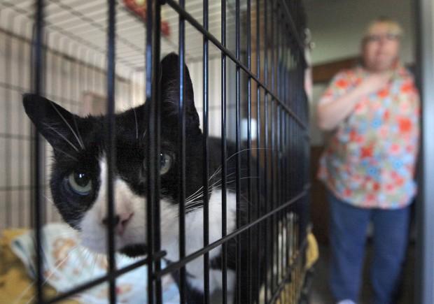 Photos Iowa County Humane Society Local News Madison Com