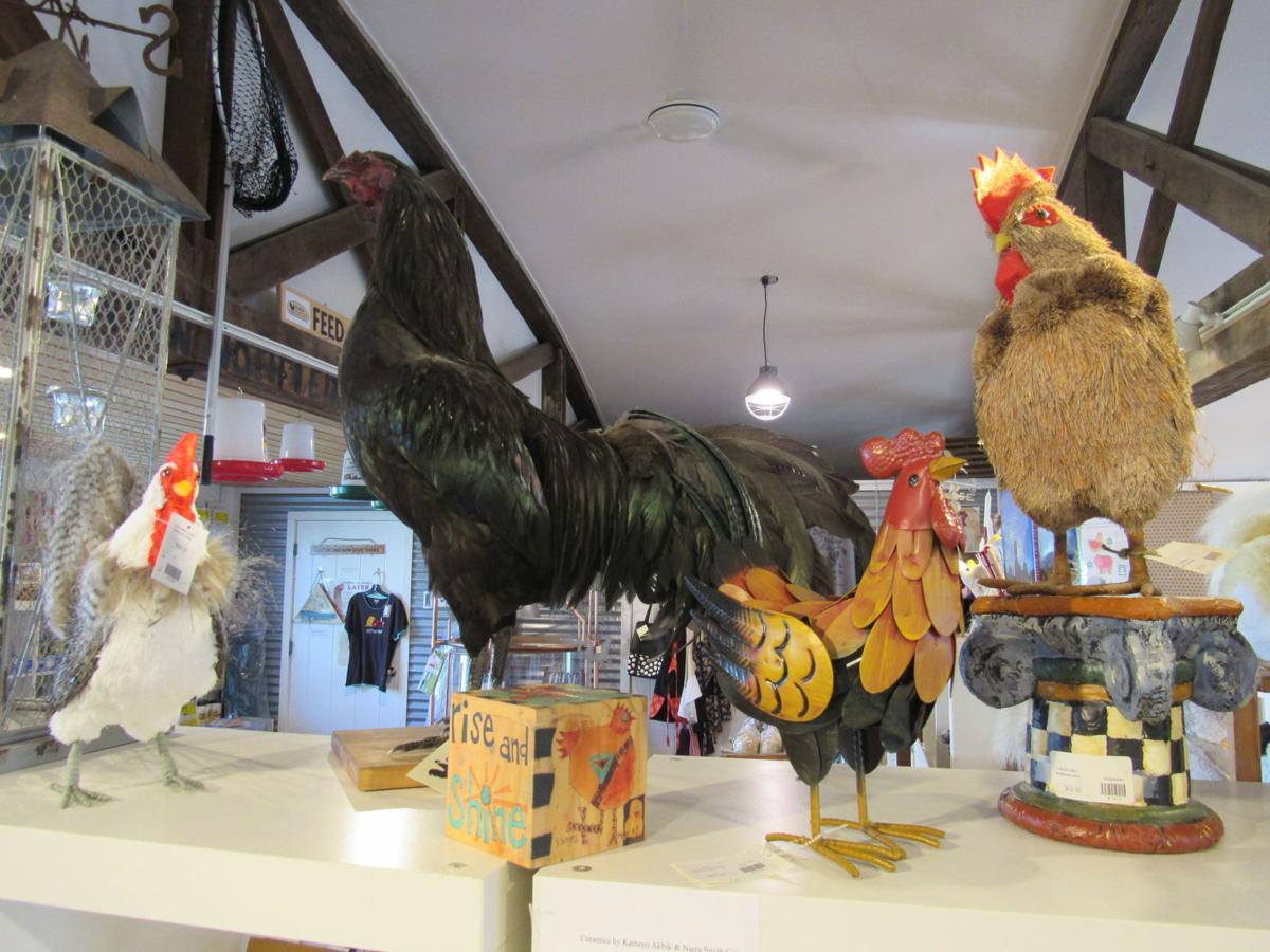 Cluck the Chicken Store