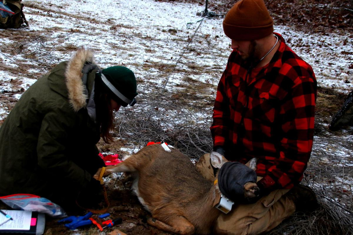 DNR employees deer study