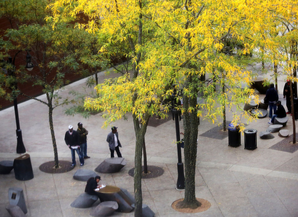 Philosophers Grove trees