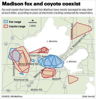 Fox and coyote map