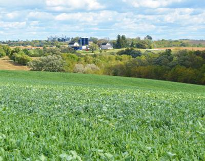 Mike Paulus: Wisconsin should encourage more farmers to plant cover crops