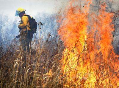 Just Ask Us: What's the point of controlled fires?