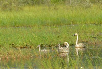 Joy Zedler: Invaluable wetlands fight floods