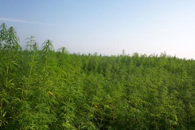 Industrial hemp farming act introduced (copy) (copy)