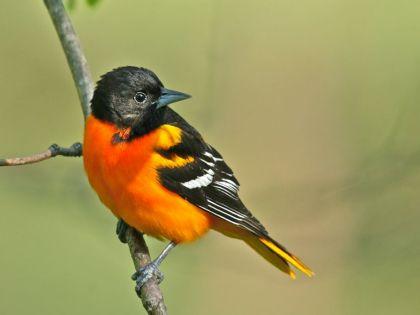 Wisconsin ranks second in U.S. in bird watching
