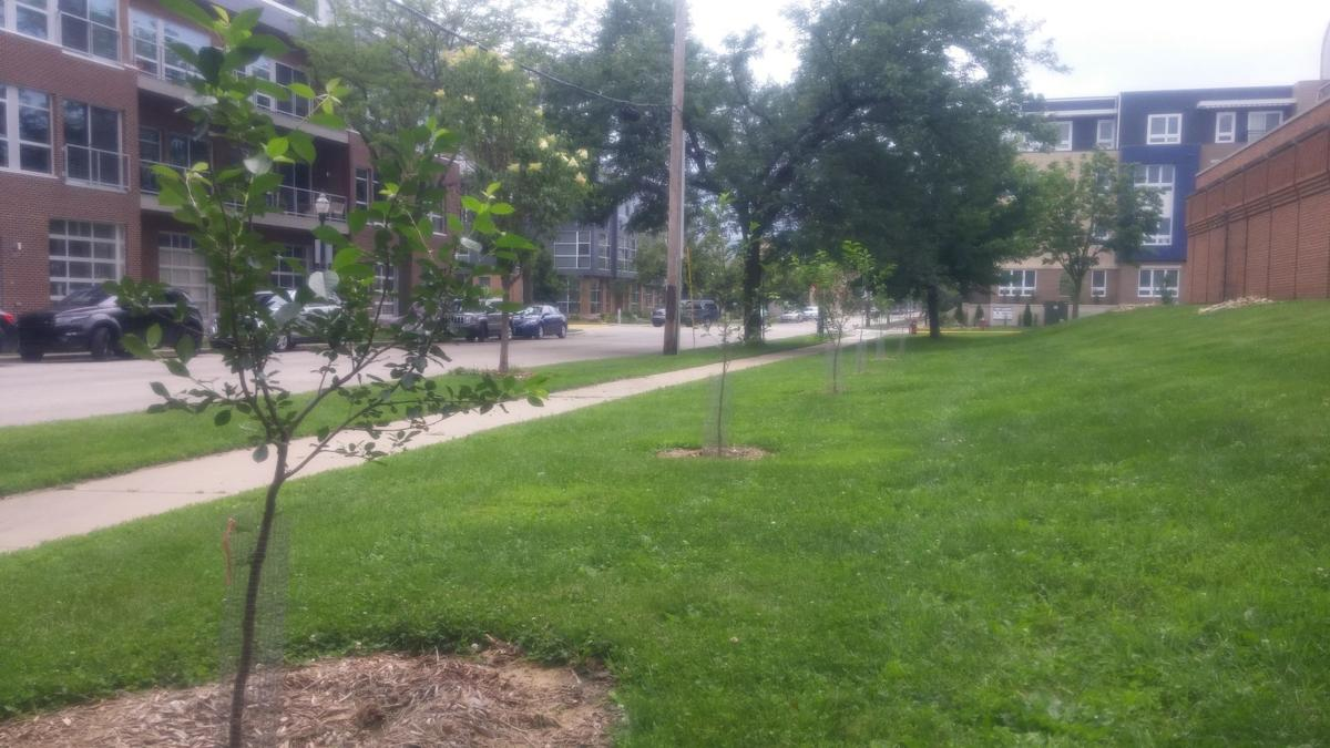 catching up madison s edible landscaping program sees few