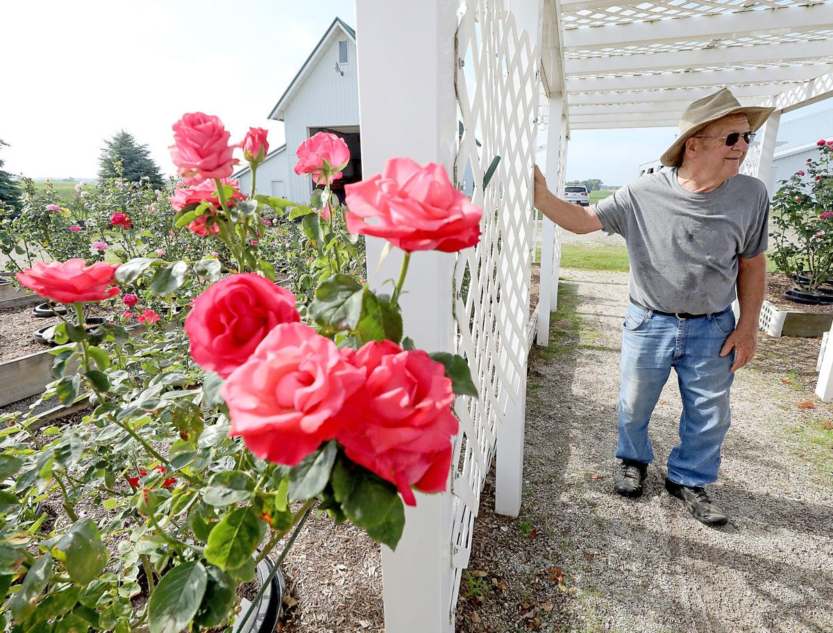 Delavan man tends 400 rose bushes in memory of his wife