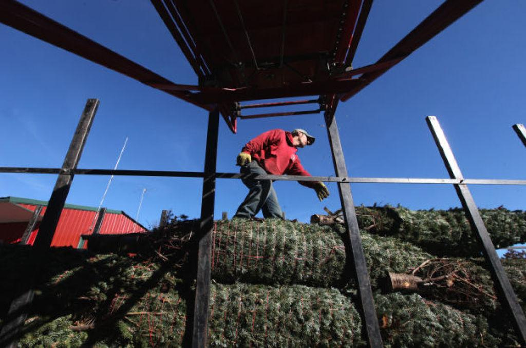 josh hess of the steigerwaldt tree farm in tomahawk arranges fraser fir trees destined for buyers in louisiana as part of a purchase agreement with happs - Christmas Tree Farm Louisiana