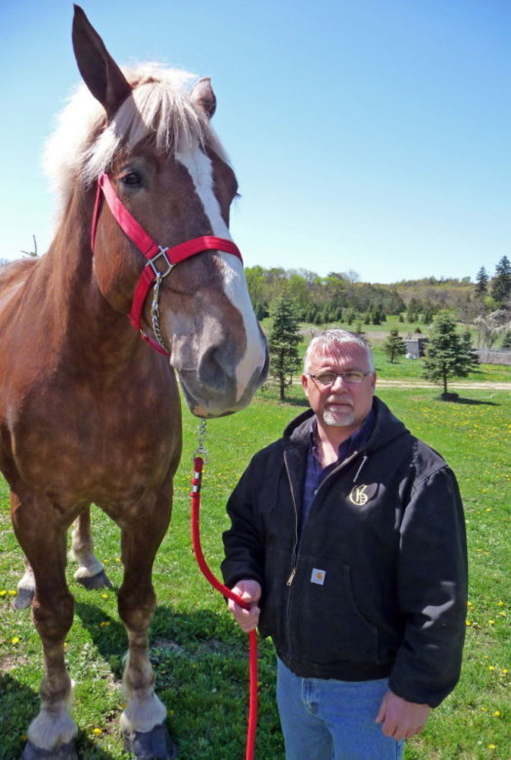 World S Tallest Horse Towering Over Midwest Horse Fair Local News Madison Com