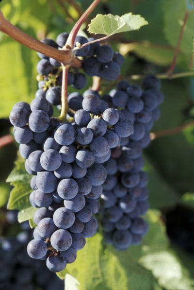 Wine and cider specialist to begin at UW-Madison