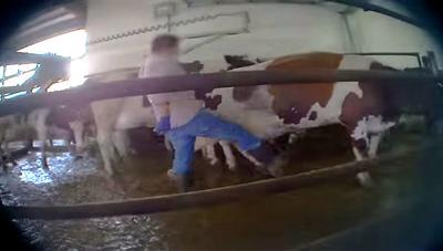 Undercover farm video