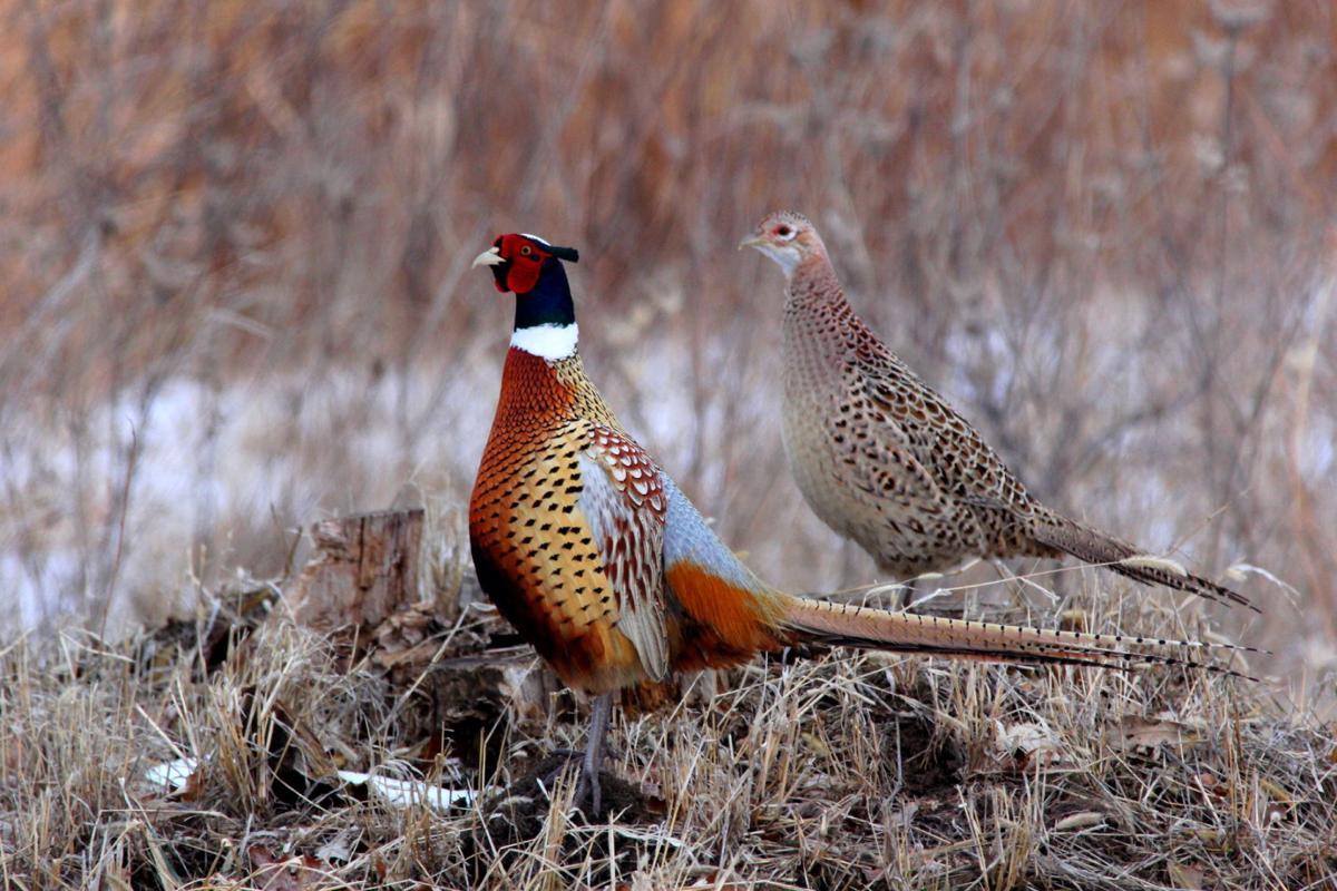 одна птицы на которых охотятся в россии забор металлического