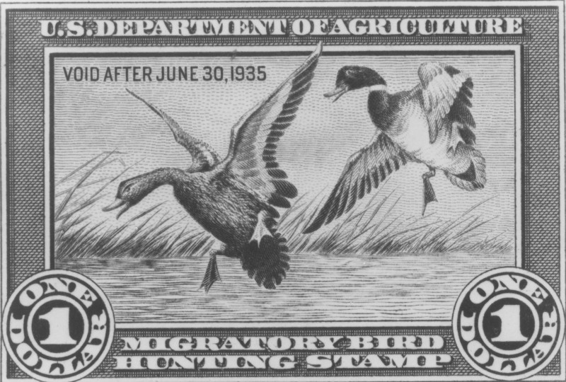 First Federal Duck Stamp