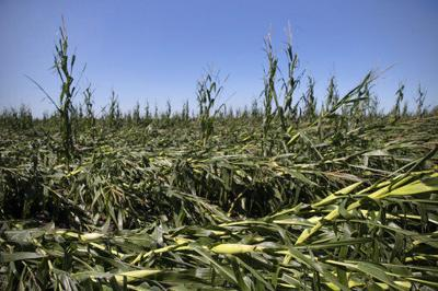 Iowa farmers assess losses