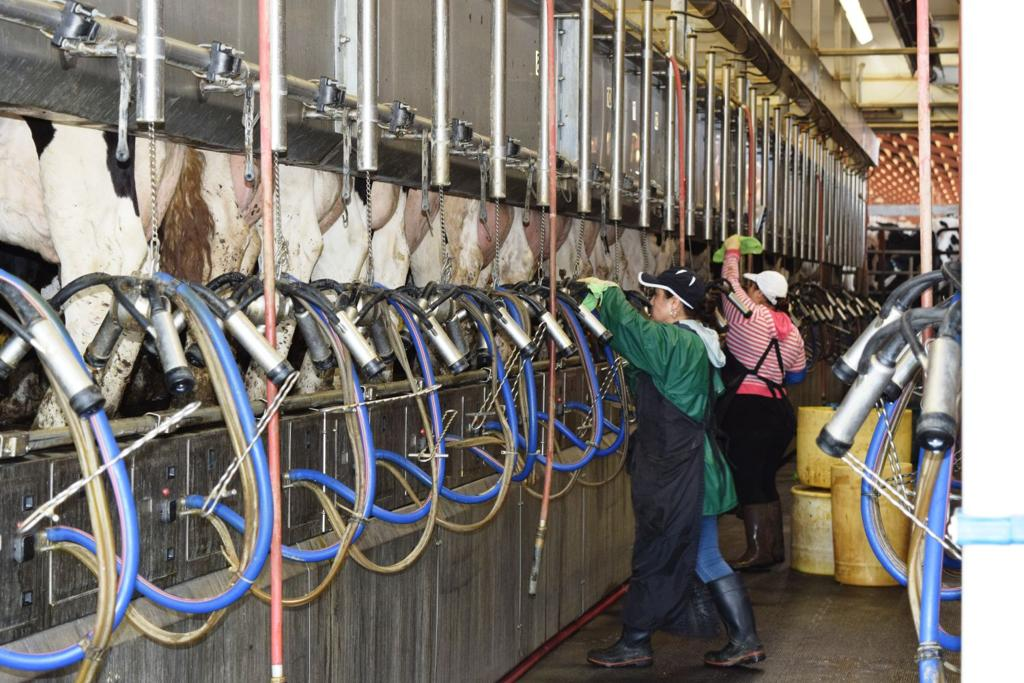 Bought milk? Deadline for refund in price-fixing settlement