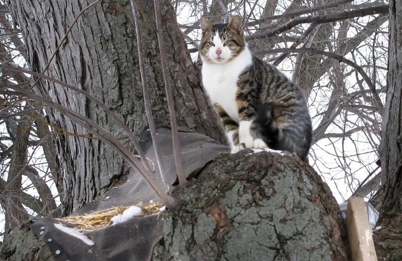 Cat in tree 042