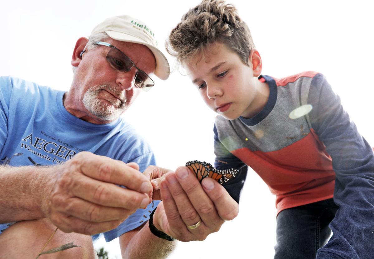Monarch tagging