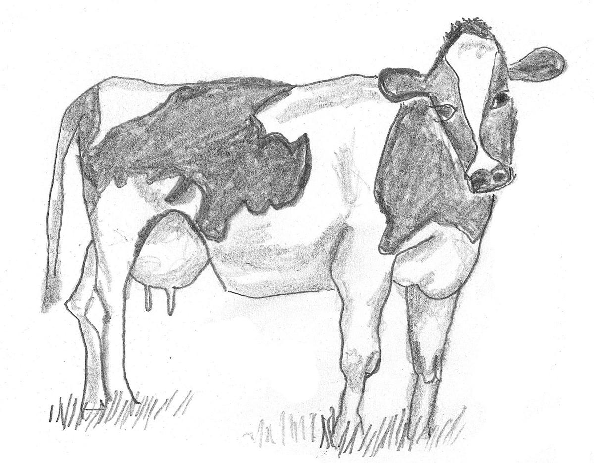 A drawing of a cow.jpg