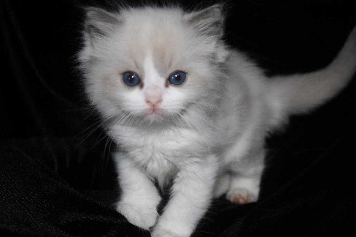 Single kitten curious