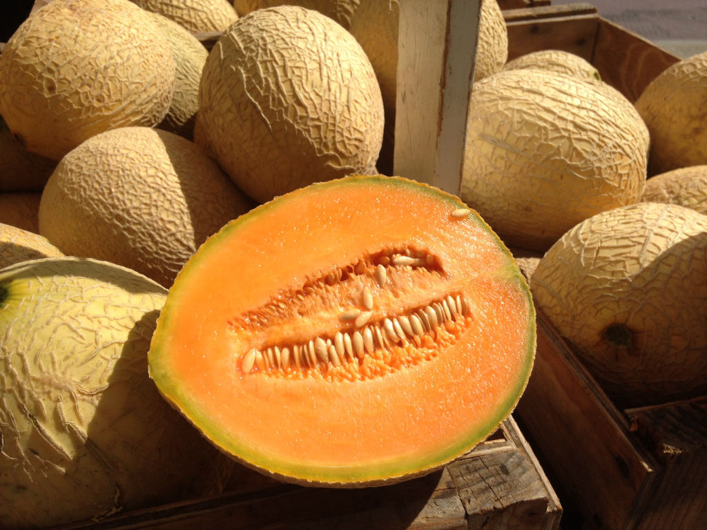 In Season Muskmelon Lifestyles Madison Com View top rated cantaloupe in season recipes with ratings and reviews. in season muskmelon lifestyles