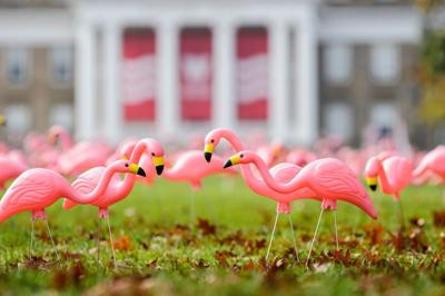 Flamingos on Bascom Hill for Fill the Hill event
