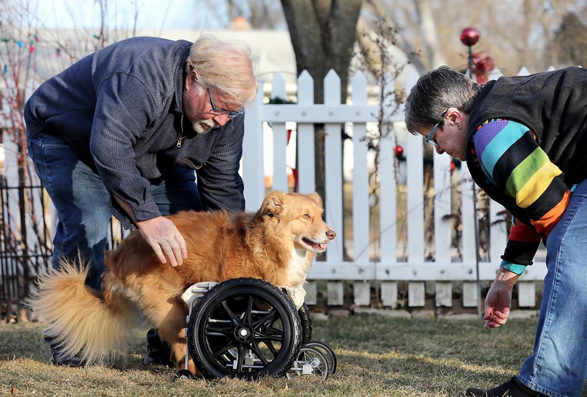 Adaptive Dog Cart