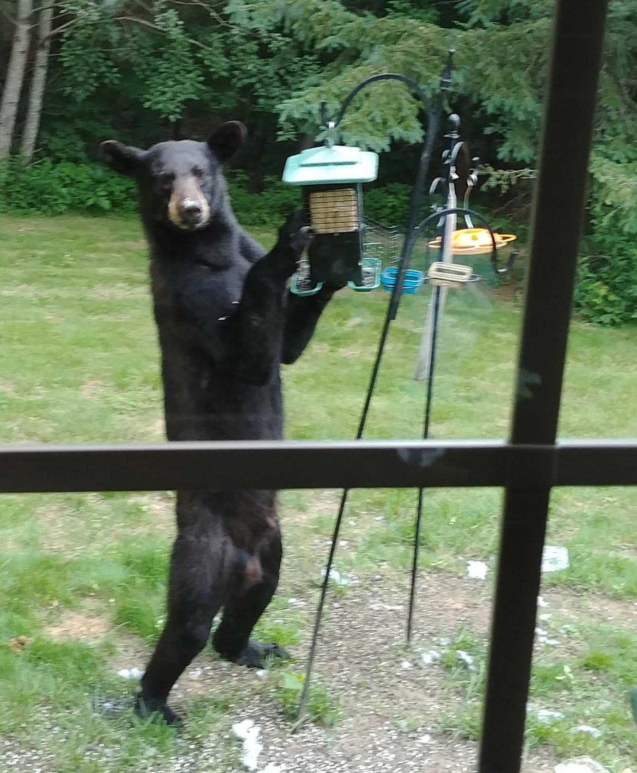 How to get rid of a bear in the garden Looking for ways 8