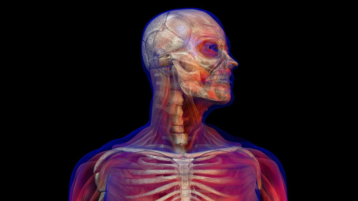 Body visualization