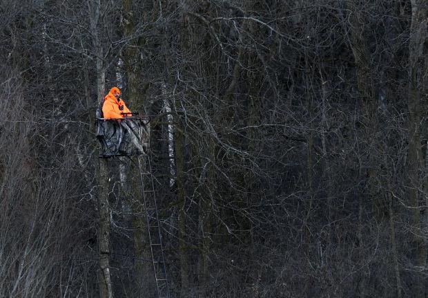 Deer Hunt