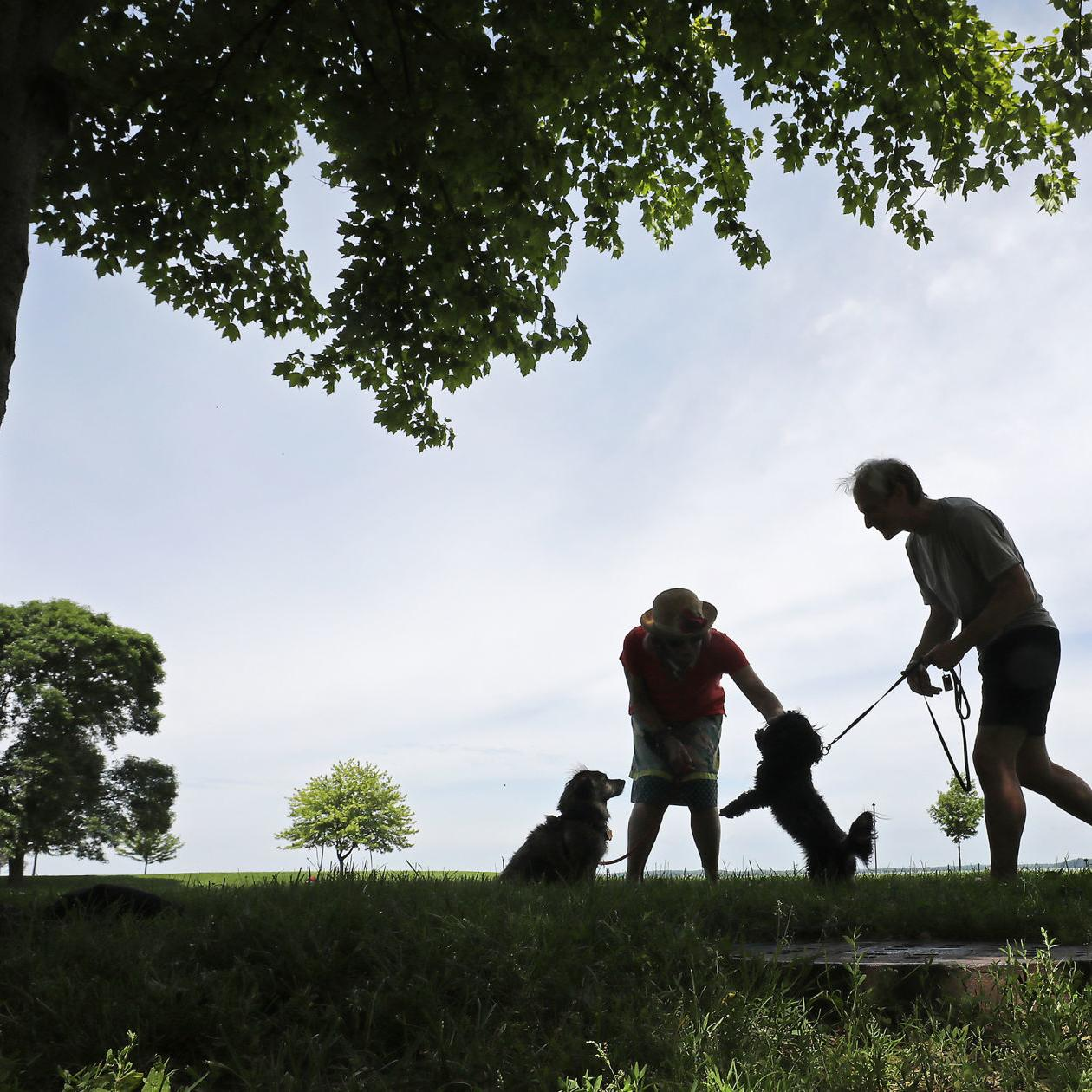 Wingra Park Madison If This Is What >> Madison May Open More Parks To Dogs Politics And Elections