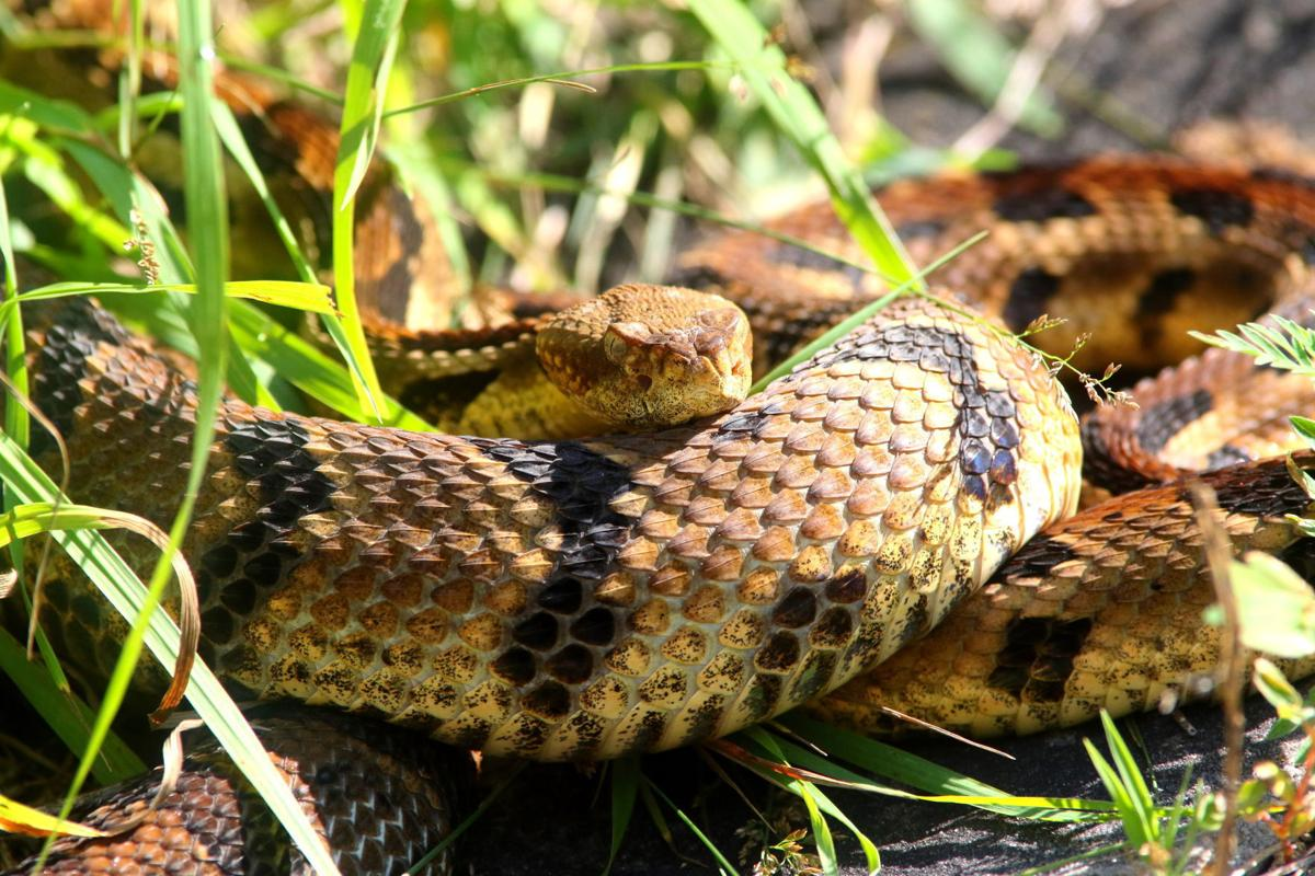 Jerry Davis: Timber rattlers just part of Wisconsin\'s summer ...