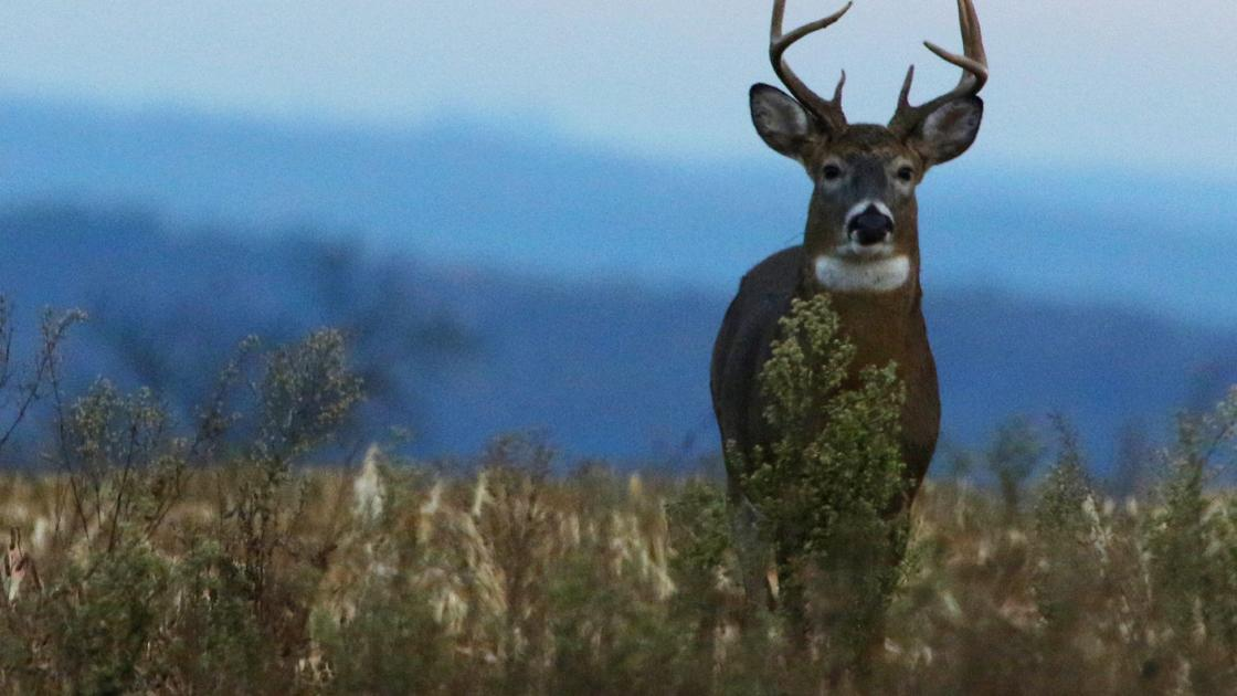 Sen. Jeff Smith and Rep. Katrina Shankland: A safe and healthy hunt