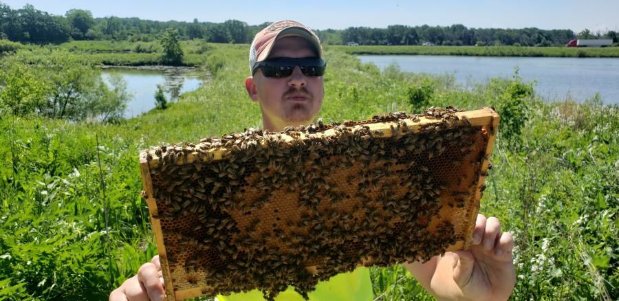Todd Chojnowski bees