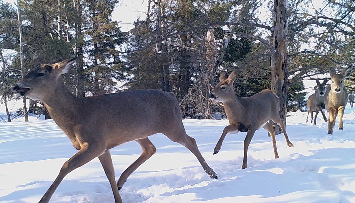 Deer bowhunt