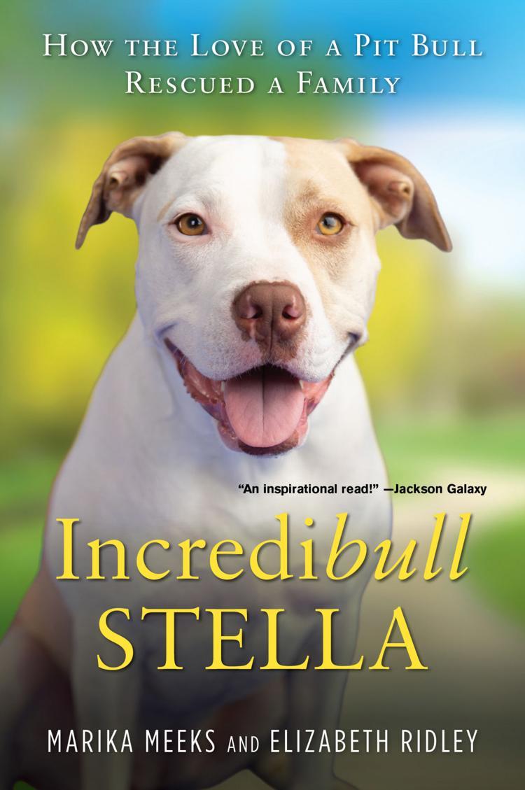 Incredibull Stella
