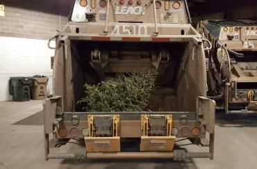 Final Christmas tree collection starting Tuesday in Madison