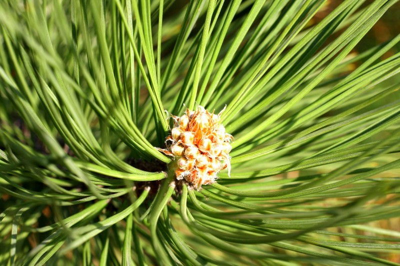 Nature's Way: Tree pollen | Outdoors | madison com