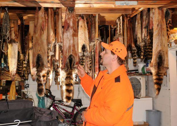 Craig Polensky examines raccoon pelts