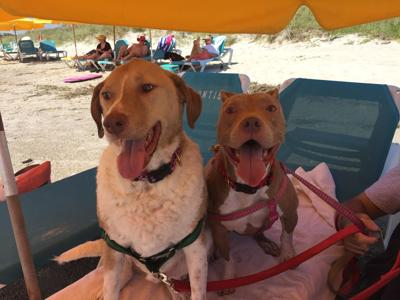 North Carolina's Dog Friendly Coast (image)