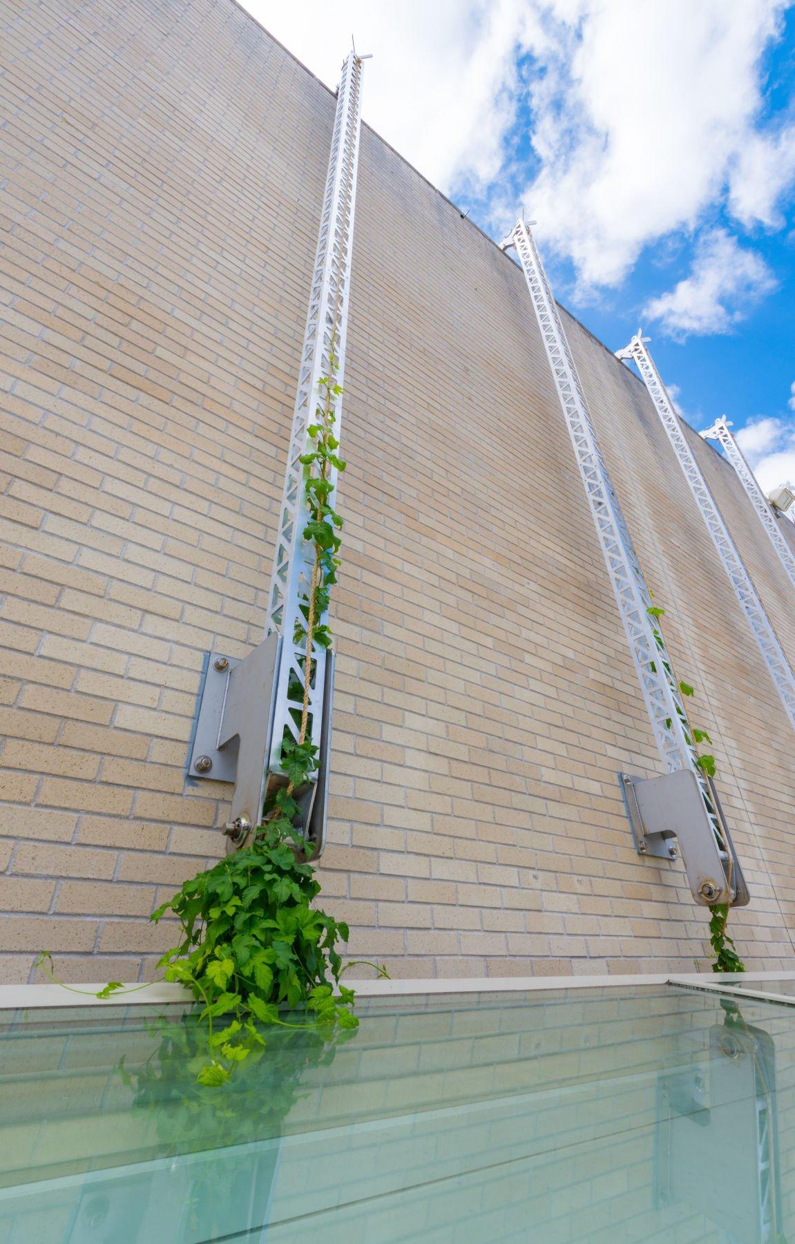 """Hops Exchange"" installation on MMOCA rooftop"