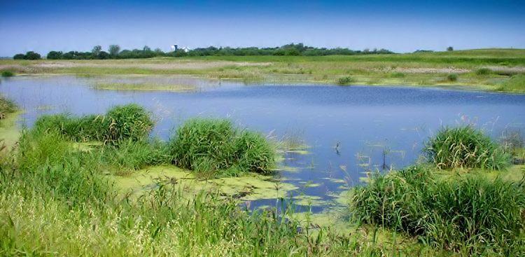Wetland adjacent to farmland