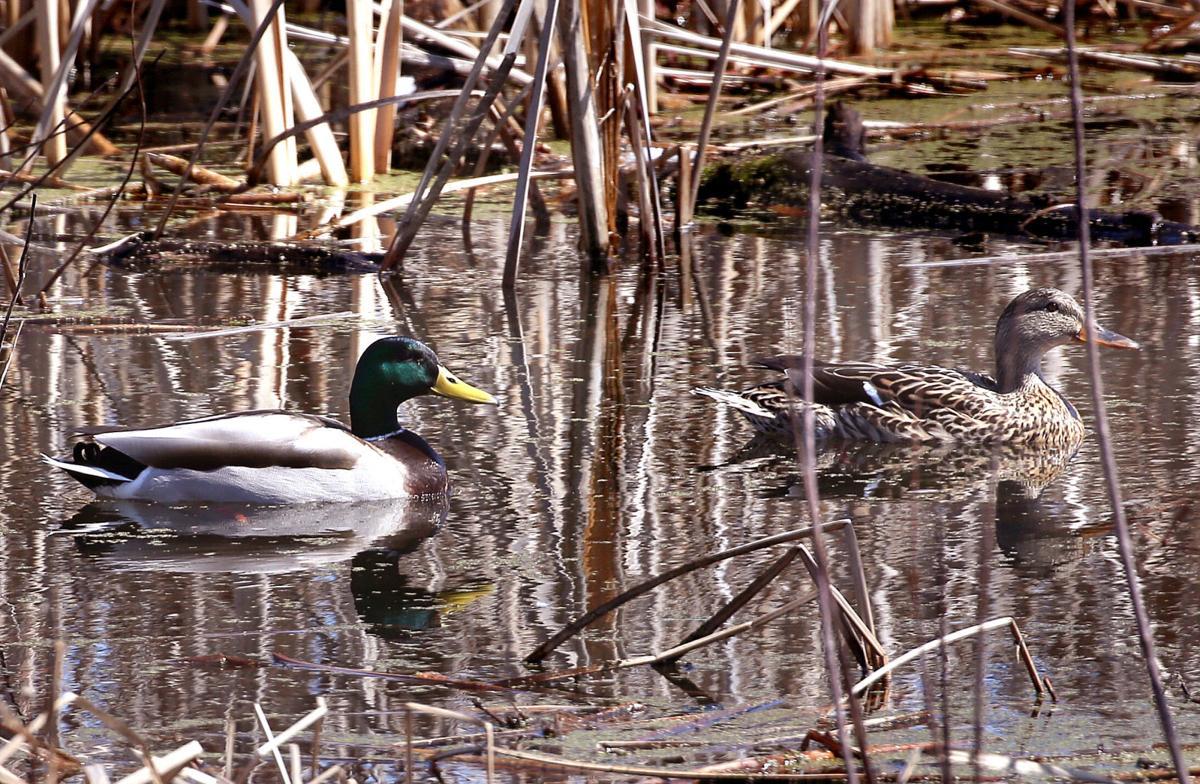 La Crosse River Marsh