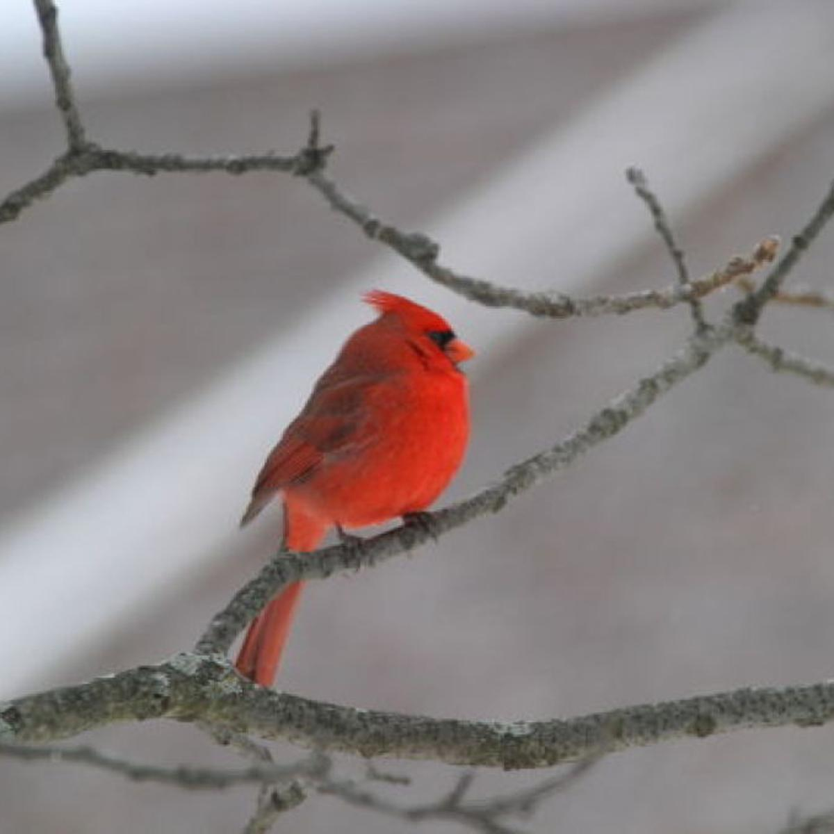 Gary Engberg Birds Always Need Your Help In The Winter Outdoors Madison Com