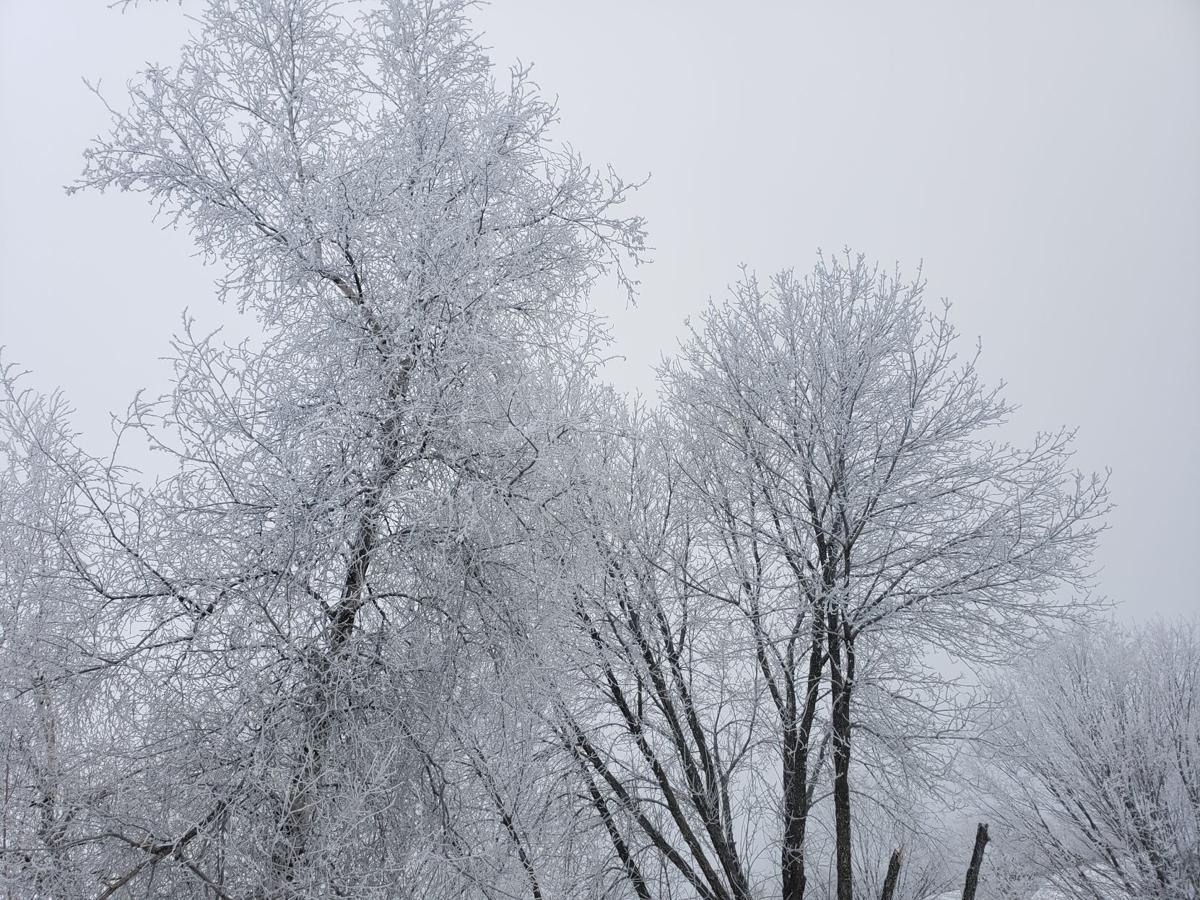 Dense freezing fog in trees 2, State Journal photo