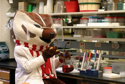 Bucky Badger the scientist