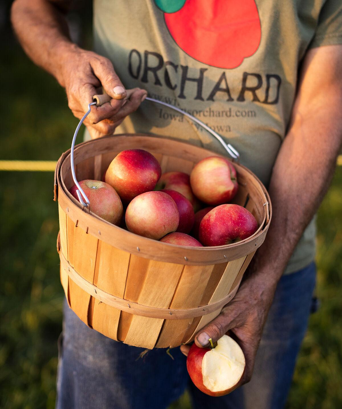 Wilson's Orchard basket of apples