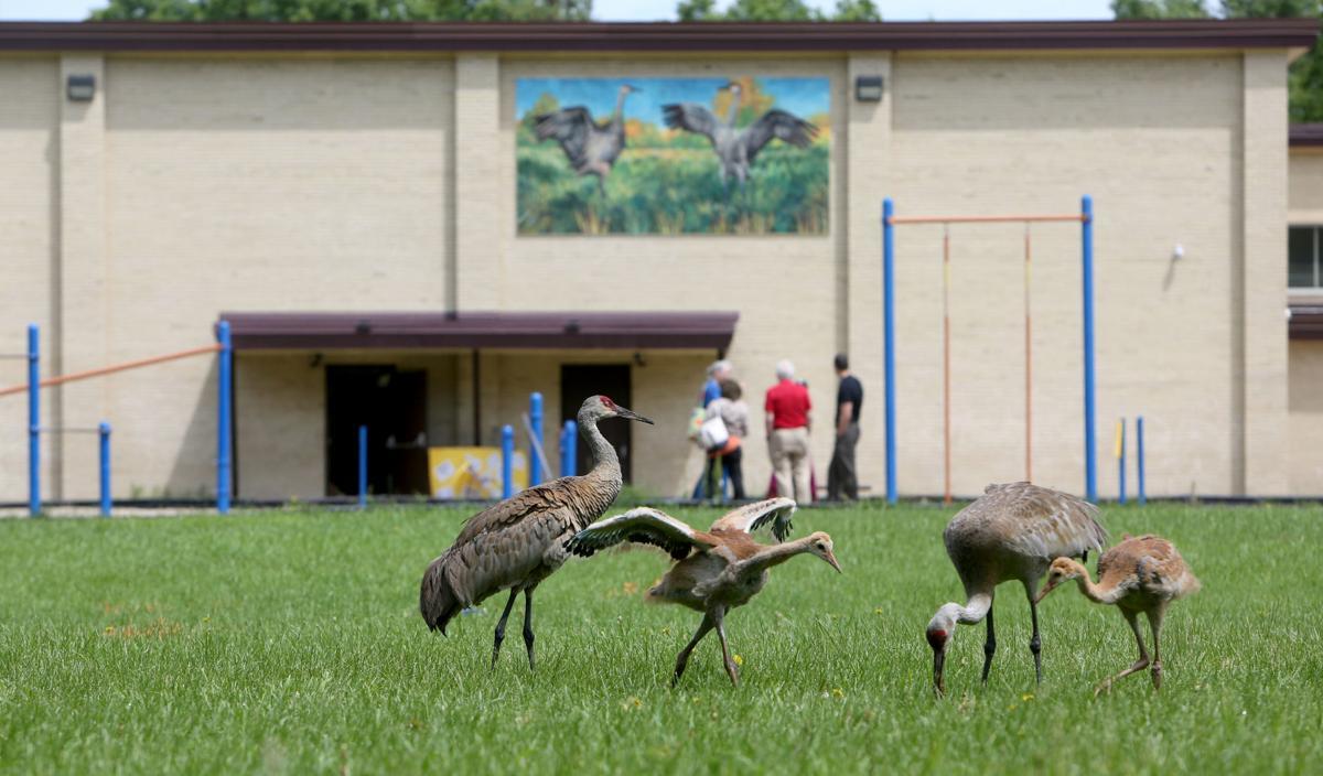 Photos: Sandhill crane mural dedication at Glendale