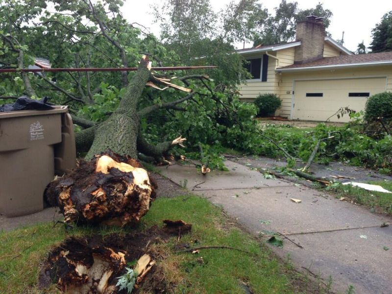 Yorkshire tree uprooted