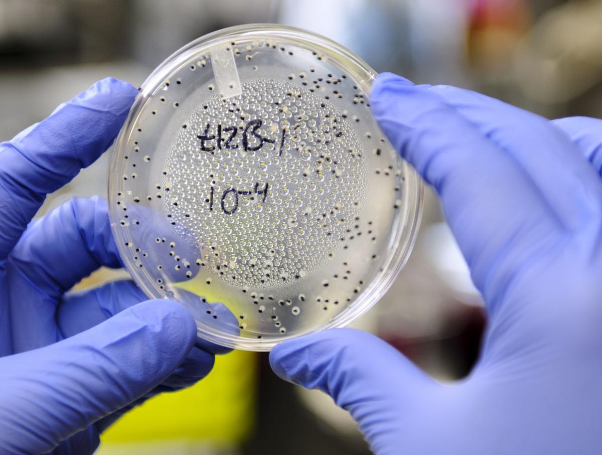 Petri plate of bacteria